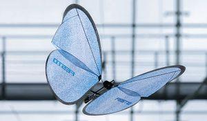 Z Festa vylétli bioničtí motýli. Váží pouhých 32 gramů